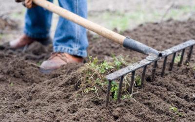 Opravila na vrtu v marcu – Eurogarden